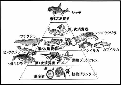 海の生態系
